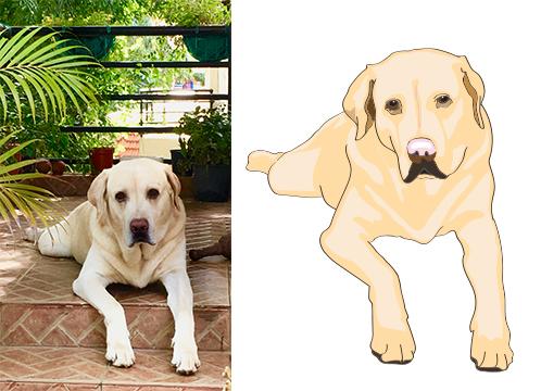 dogsample.jpg